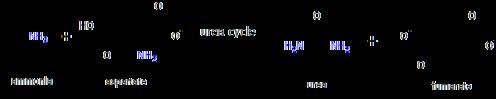 Ammonia to urea