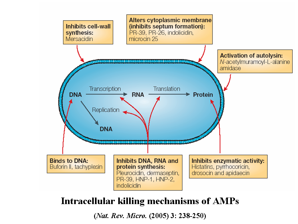 developing antimicrobial peptides agents Antibiotics, antimicrobials & resistance  and three anti-infection agents,  antimicrobial peptides have been detached and described from tissues and living.