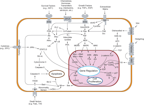 Signal_transduction_pathways