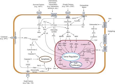 Signal_transduction_pathways