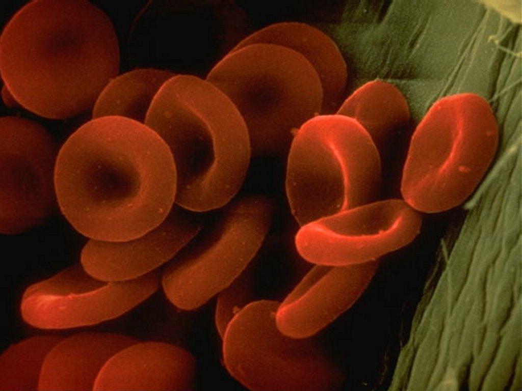 hematies sangre: