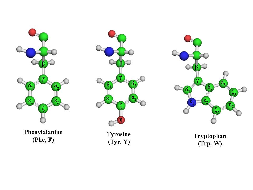 Amino Acids: Chemistry, Biochemistry & Nutrition | Amit Kessel Ph.D