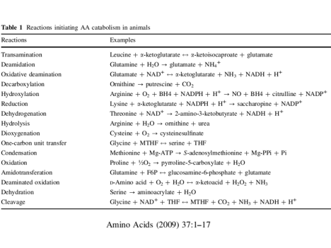Amino acids catabolic processes