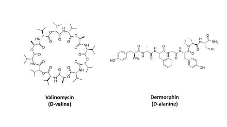 D-amino acids peptides