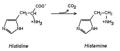 Amino Acids on transmission