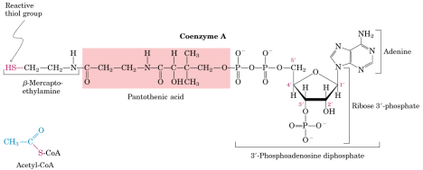 pantothenate synthetase function production and kinetics Extensive genome reduction in obligate endosymbiotic bacteria is a pantothenate synthetase (ps) a pisum β-alanine munaretto c, ulas s, stelzer m, grote a, scheer m, schomburg d: brenda in 2013: integrated reactions, kinetic data, enzyme function data, improved disease classification.