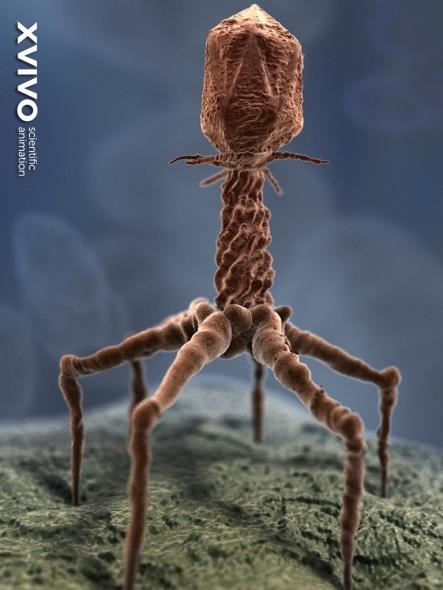 Bacteriophage1024x768